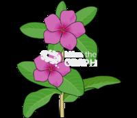 Catharanthus roseus stem leaf