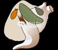 Cerastoderma edule bivalve cut structure