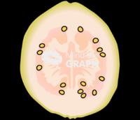 Common guava white front cut