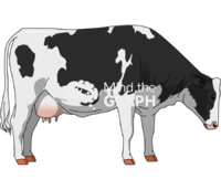 Cow drinking eating lateral