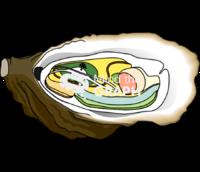 Crassostrea gigas digestive system ventral