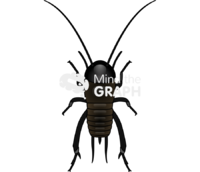 Cricket bug dorsal