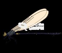 Dragonfly anisoptera 2