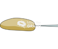 Drosophila embryo injection