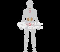 Endocrine system woman shape