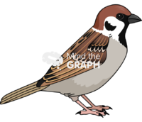 European sparrow bird