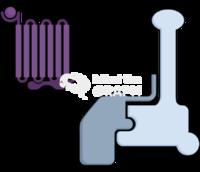 Gprotein linked receptor signaling