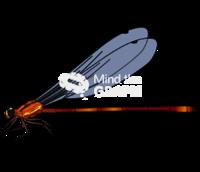 Heteragrion alienum lateral