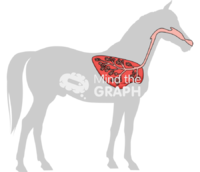Horse respiratory system shape lateral