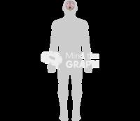 Human brain body shape