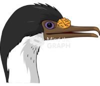 Imperial shag head lateral