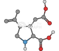 Kainate molecule