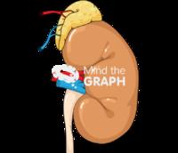 Kidney adrenal gland left