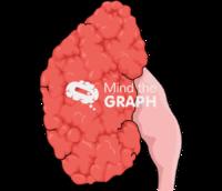 Kidney chronic pyelonephritis