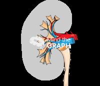 Kidney cut part 5