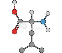 Leucine molecule