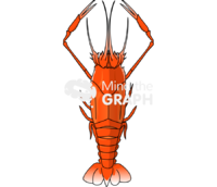 Lobster polycheles thyphlops dorsal