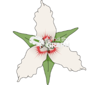 Monocotyledon flower