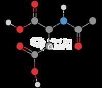 N acetylaspartate molecule