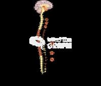 Nervous system sympathetic response