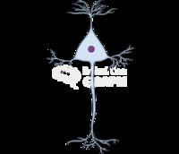 Neuron pyramidal