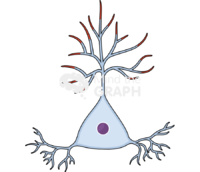 Neuron pyramidal 2 recovery
