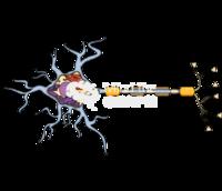 Neuron structure mielin cut