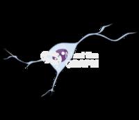 Oligodendrocyte 2