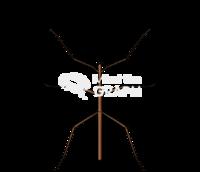 Phasmida insect dorsal