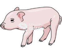 Piglet lateral