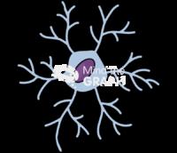 Primate microglia 1