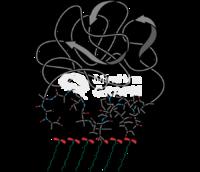 Protein adsorption molecules 3