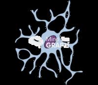 Reactive primate microglia