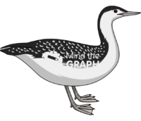 Red throated loon adult nonbreeding