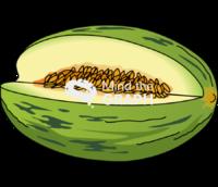 Santa claus melon cut