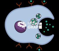 Secretory cell autocrine