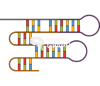 Single rna genetics