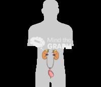 Studer pouch surgery torso shape
