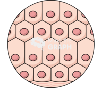 Tissue cell zoom