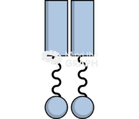 Toll like receptor front