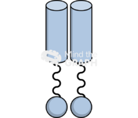 Toll like receptor perspective