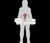 Urinary system woman shape