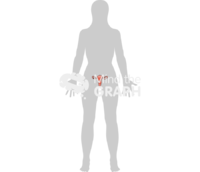 Uterus female reproductive system body shape front