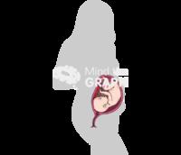 Woman pregnant cut body
