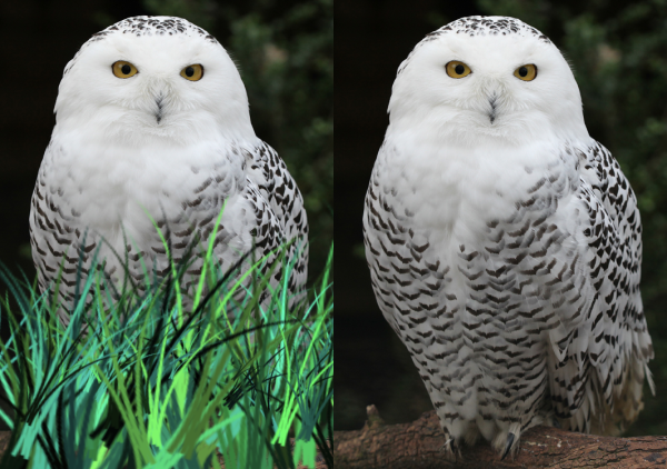 Pwl-Grasses