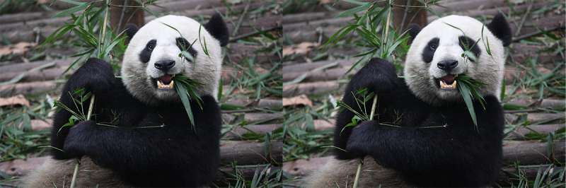 Smudge-Tool-Panda