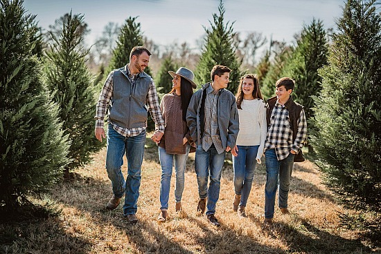 Tree Farm Mini Sessions