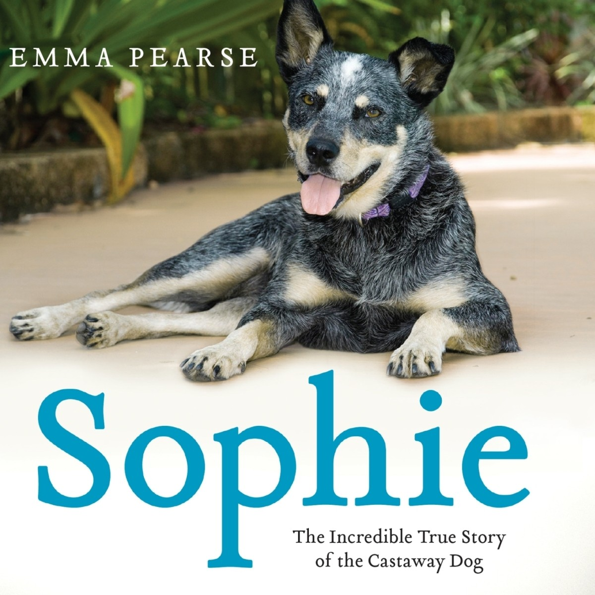 Printable Sophie: The Incredible True Story of the Castaway Dog Audiobook Cover Art