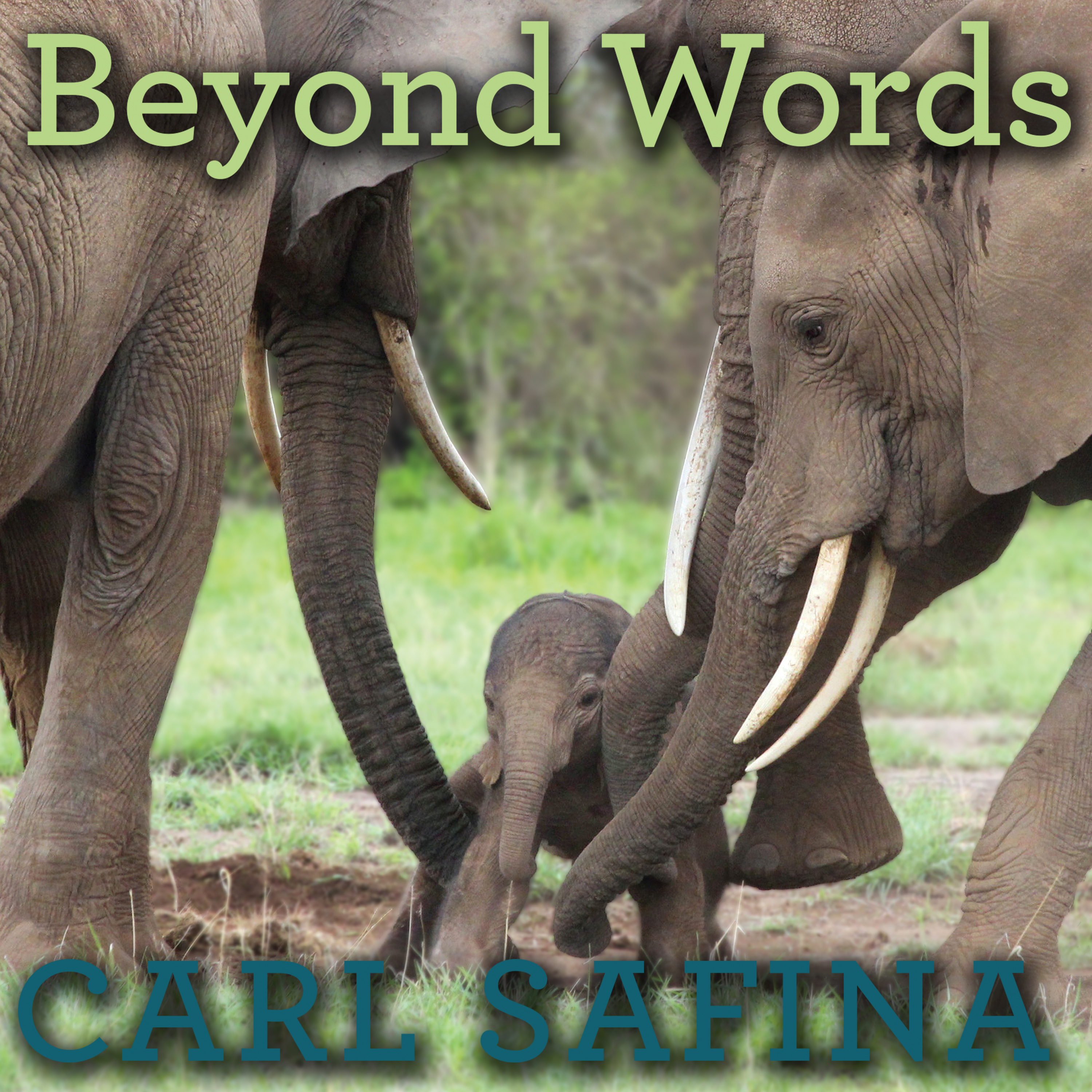 Printable Beyond Words: What Animals Think and Feel Audiobook Cover Art