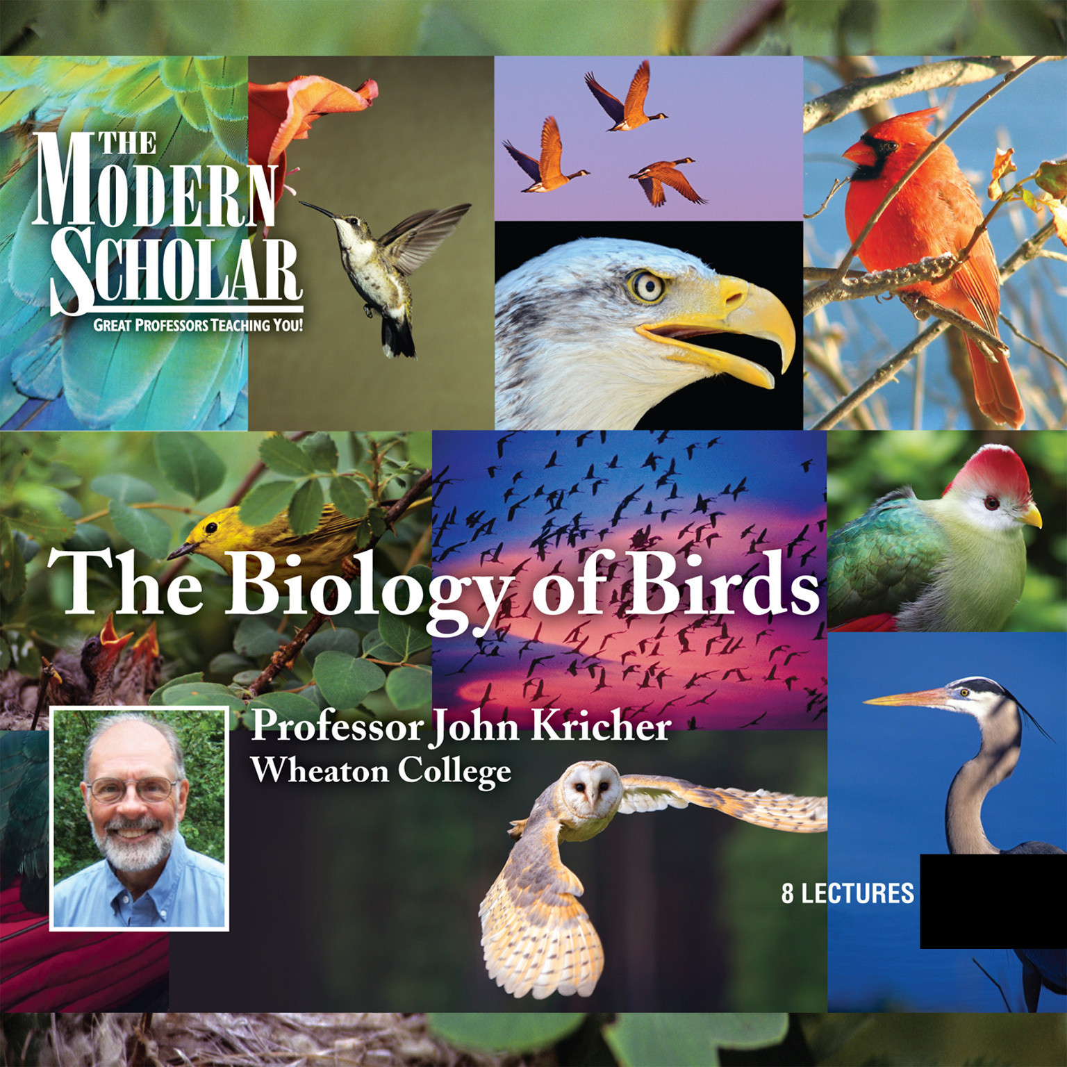 Printable The Biology of Birds Audiobook Cover Art